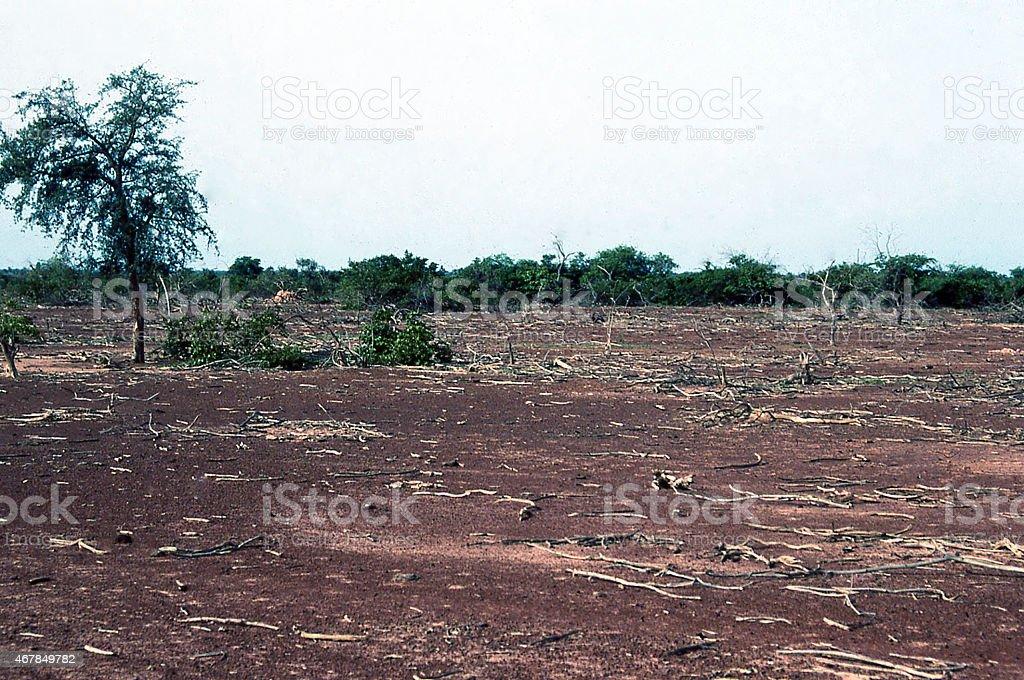 Dead Vegetation from Severe Drought Sahel Burkina Faso West Africa stock photo