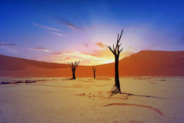 dead vlei in der morgendämmerung mit einem verschwommenen blau sonnenaufgang, namibia - namib wüste stock-fotos und bilder