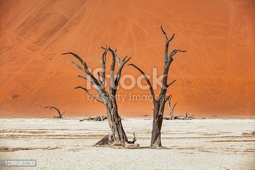 istock Dead Vlei Dead Trees Namib Desert Sossusvlei Namibia 1299383233