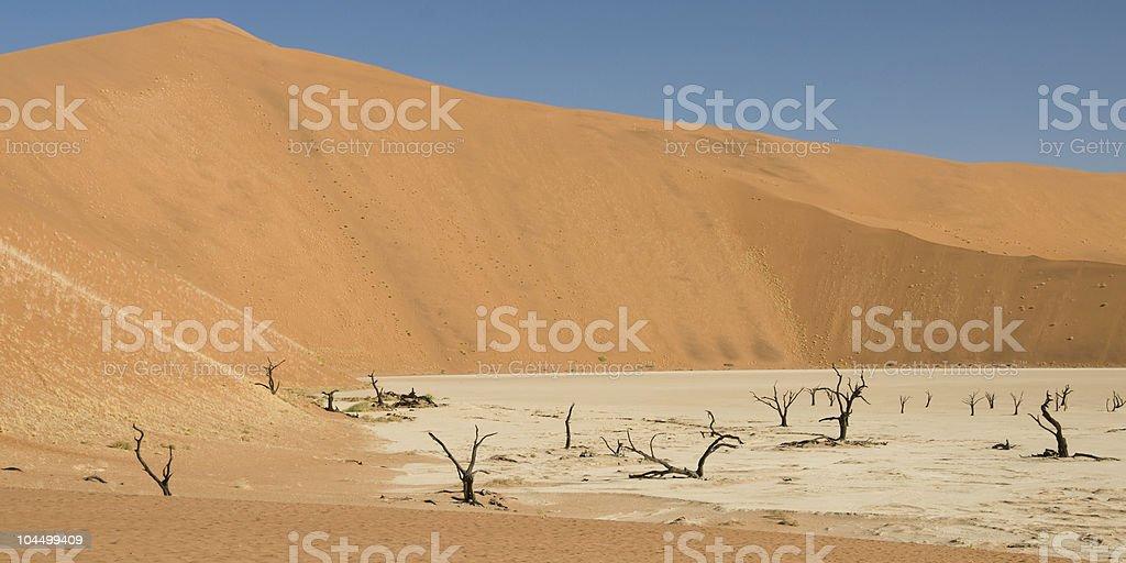 Dead Vlei desert stock photo