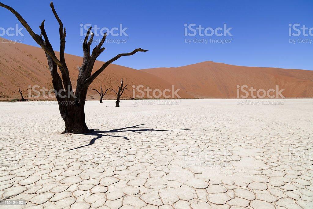 Dead Vlei in Namibia stock photo