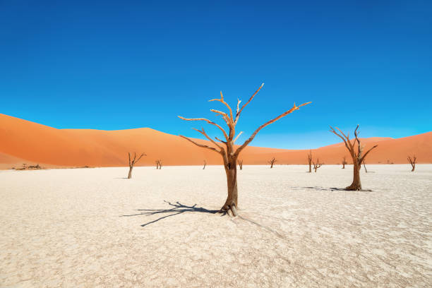 Dead Vlei in Naukluft National Park, Namibia, taken in January 2018 Dead Vlei in Naukluft National Park, Namibia, taken in January 2018 namib desert stock pictures, royalty-free photos & images