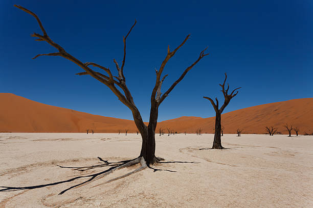dead vlei - desolated stock pictures, royalty-free photos & images