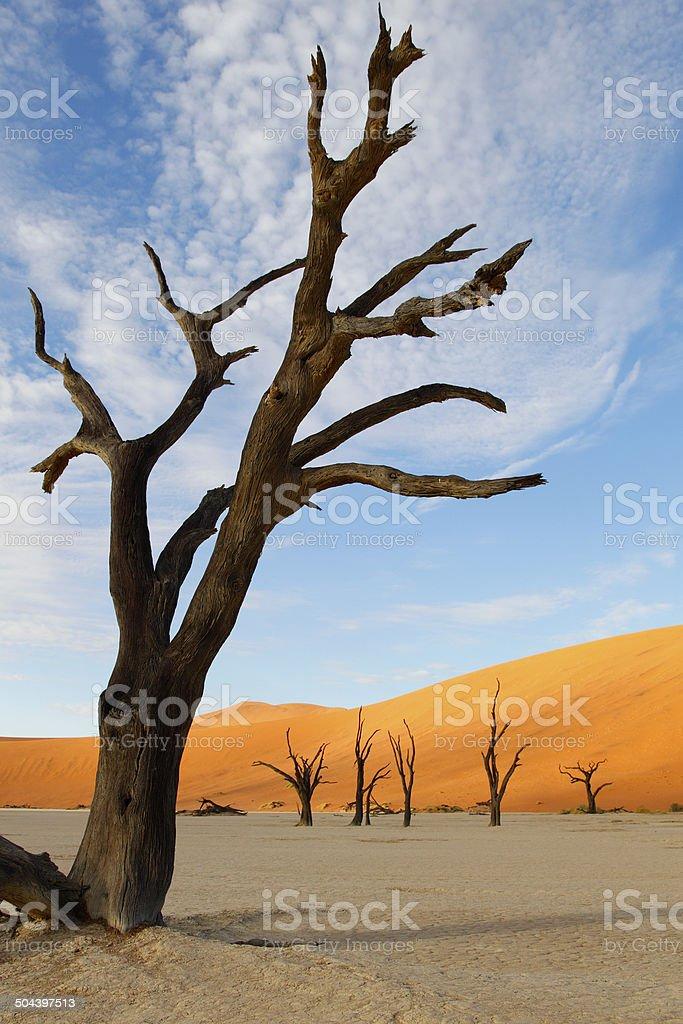 Dead Vlei, Sossulvlei, Namibia stock photo