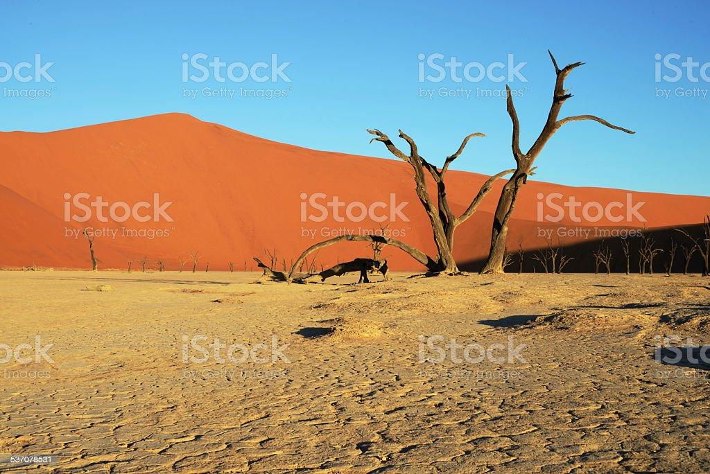 Dead Vlei, Sossusvlei, Namibia stock photo