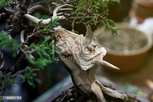 Dead wood juniper bonsai art tree trunk, Wood textures, Nature art concept