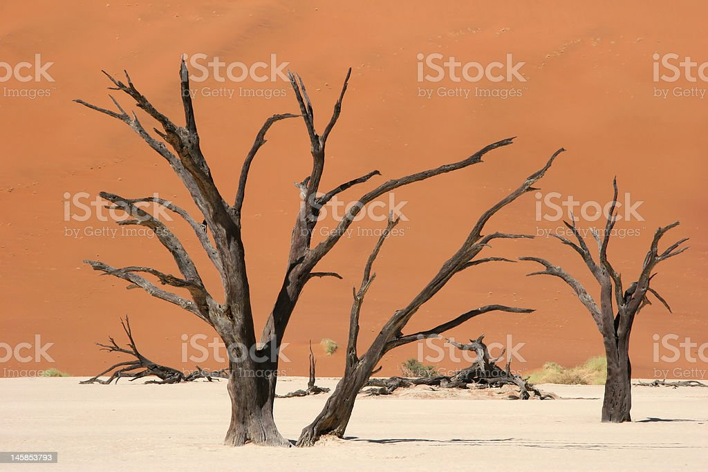 Dead wood royalty-free stock photo