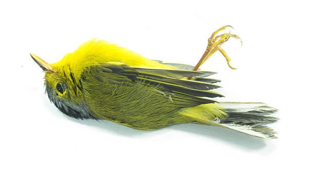 dead yellow bird – Foto