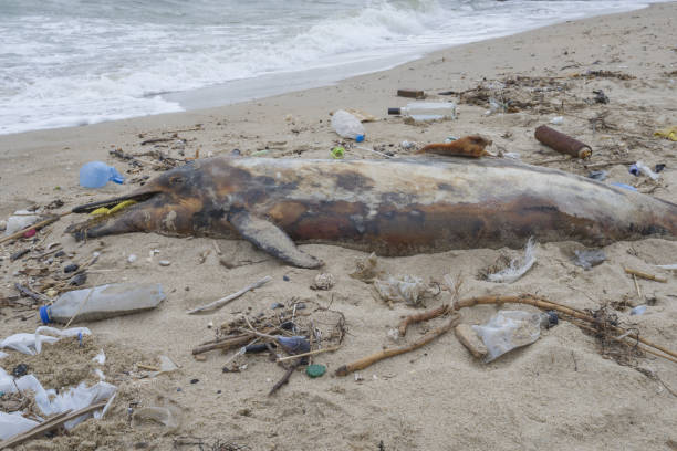 Dead young dolphin is washed up on the shore surrounded by plastic bottles, bags and rubbish thrown in the sea, on background a Black Sea. Plastic pollution killing marine animals. stock photo