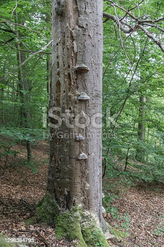istock dead_tree 1296364793