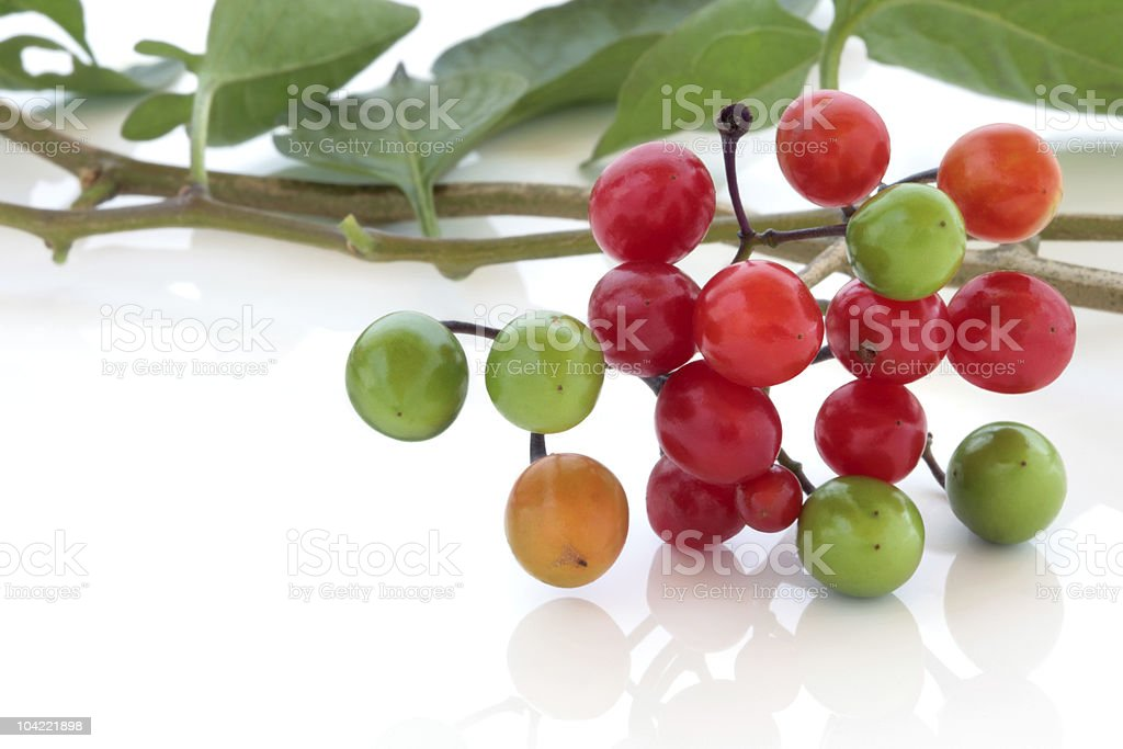 Deadly Nightshade royalty-free stock photo