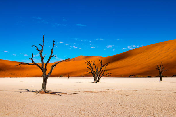 Deadvlei in Sossusvlei, Namibia Deadvlei is a white clay pan located near the more famous salt pan of Sossusvlei, inside the Namib-Naukluft Park in Namibia. namibia stock pictures, royalty-free photos & images