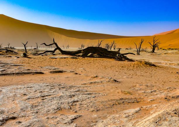 Deadvlei in the Namib desert, Namibia. stock photo