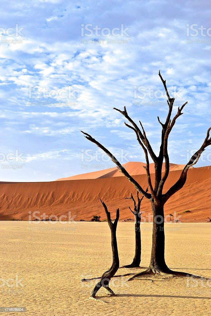Deadvlei, Namibia stock photo