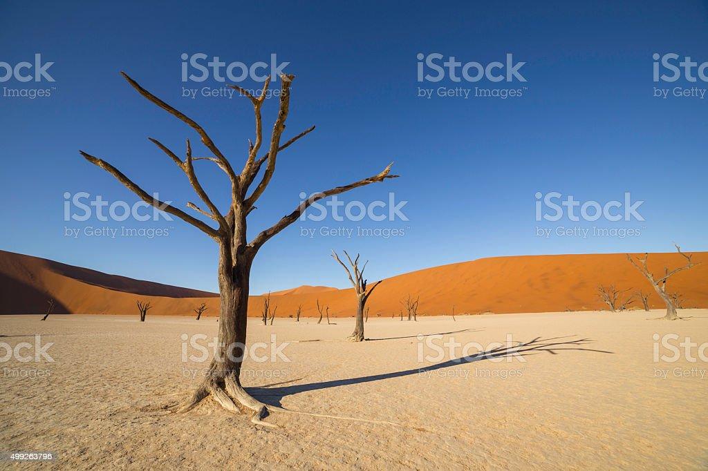 Deadvlei, or Dead Vlei, in Sossusvlei, Namibia stock photo