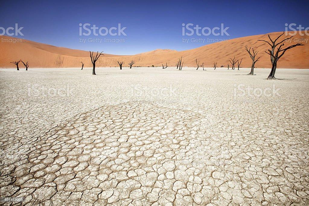 Deadvlei stock photo