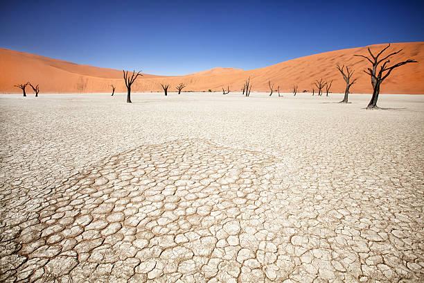 deadvlei - namib wüste stock-fotos und bilder