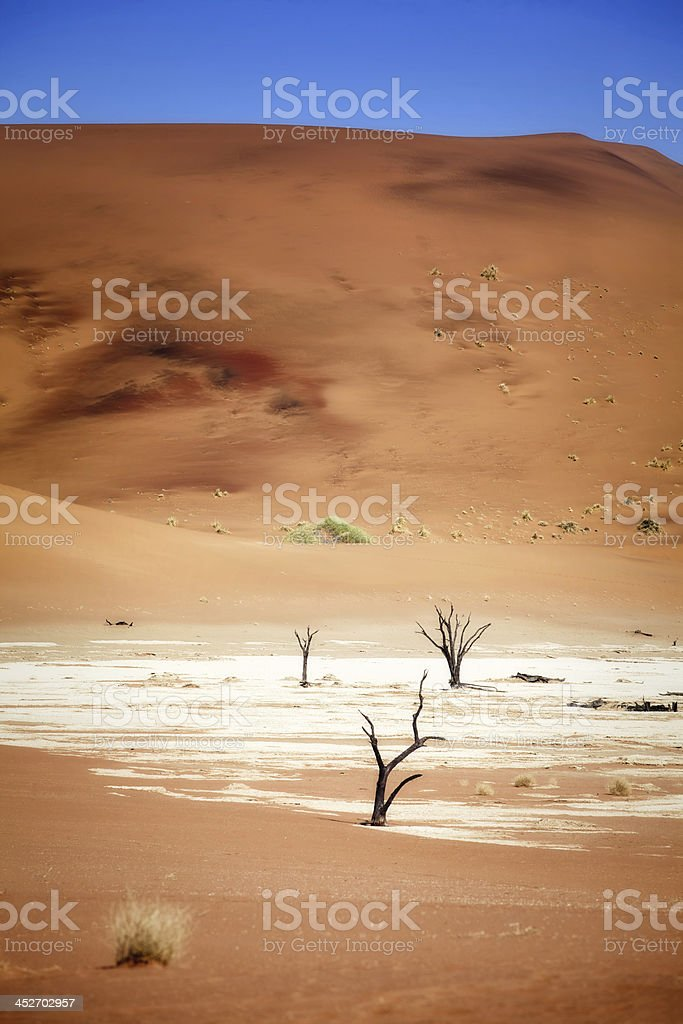 Deadvlei royalty-free stock photo