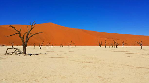 Deadvlei Deserto del Deadvlei, Sossusvlei, Namibia namib desert stock pictures, royalty-free photos & images