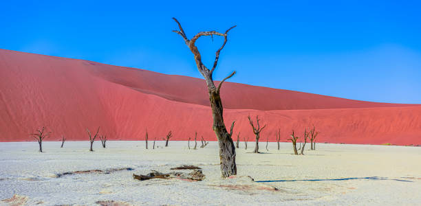 Deadvlei, Sesriem, Namibia – Foto