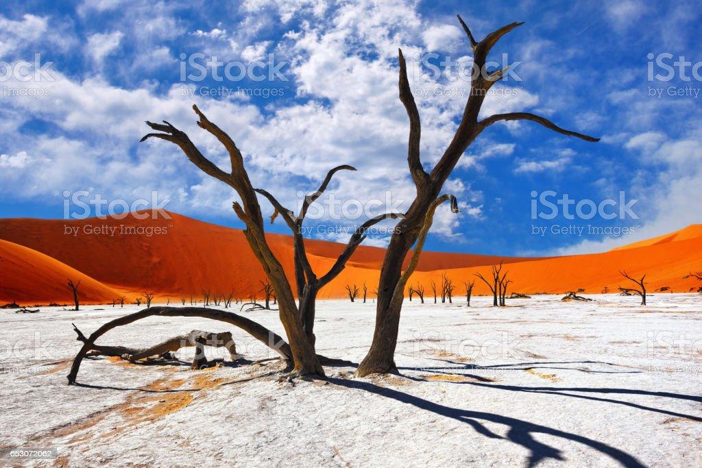 Deadvlei, Sossusvlei. Namibia stock photo