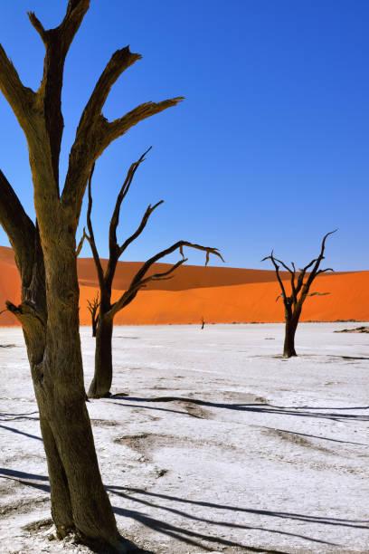 deadvlei, sossusvlei. namibia - namib wüste stock-fotos und bilder