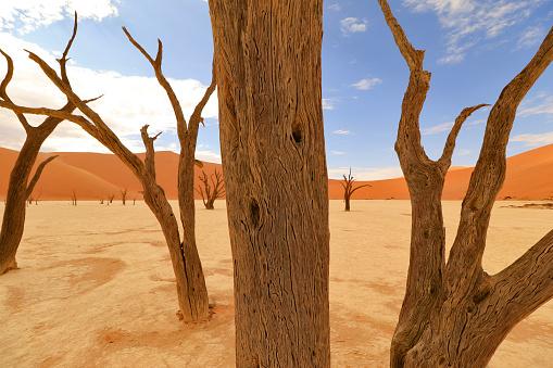 Deadvlei Sossusvlei Namibian desert floor red sand dunes trees hiking