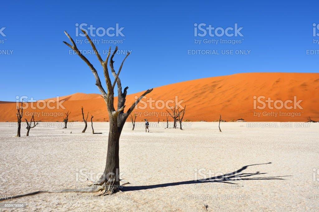 Deadvlei, Sossusvlei. Namib-Naukluft National Park, Namibia stock photo