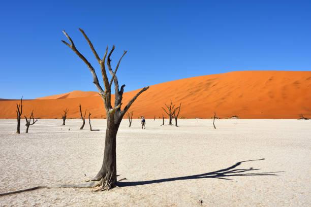 deadvlei, sossusvlei. namib-naukluft national park, namibia - namib wüste stock-fotos und bilder