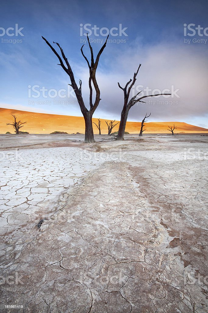 Deadvlei tree royalty-free stock photo
