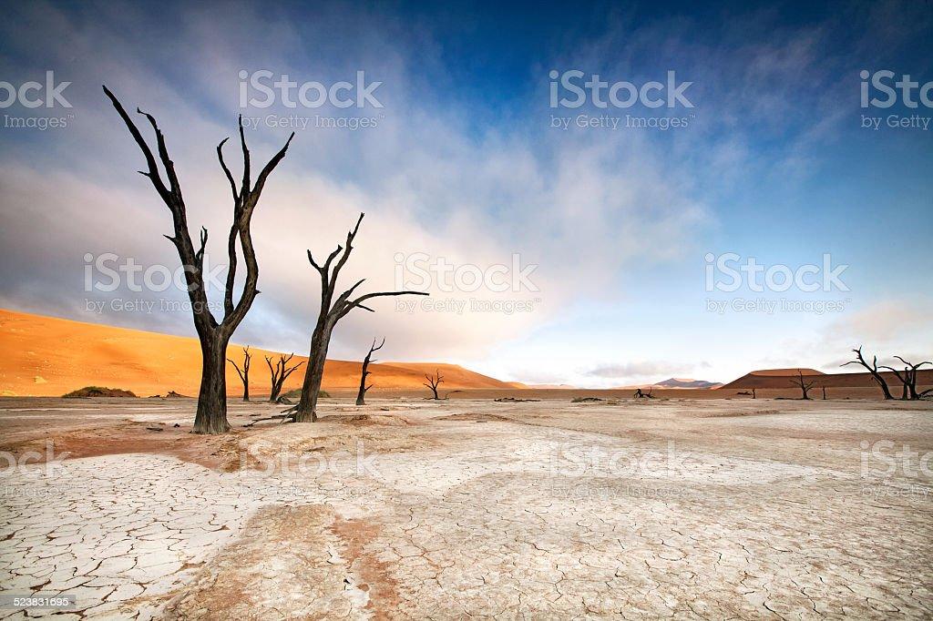 Deadvlei trees stock photo