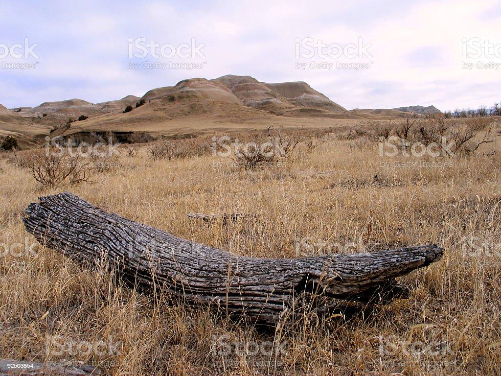Deadwood royalty-free stock photo