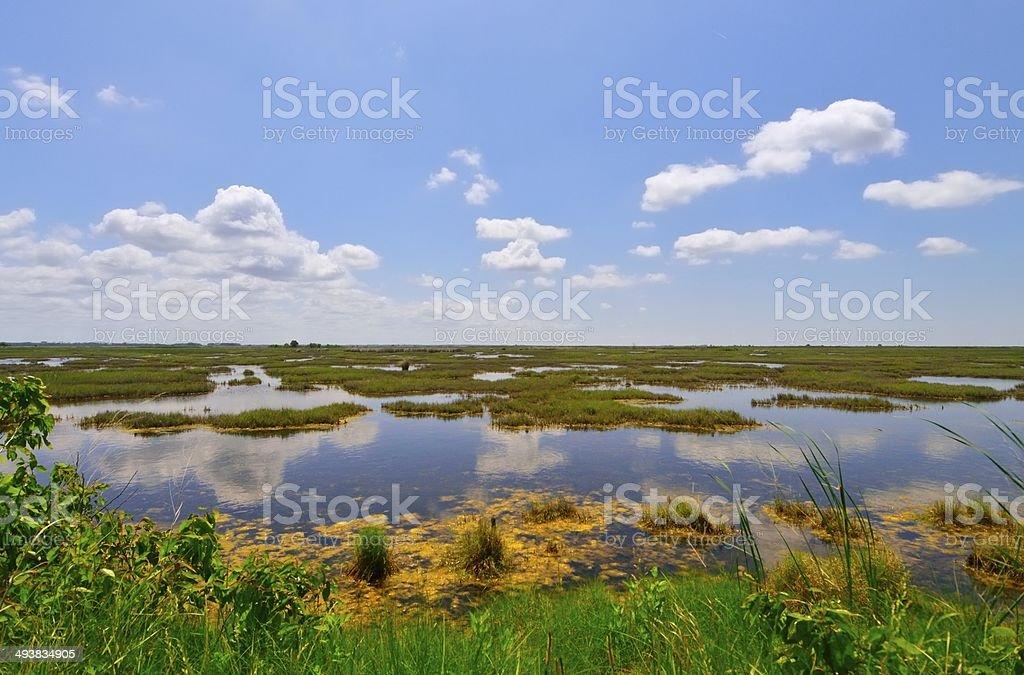 Deal Island Landscape stock photo