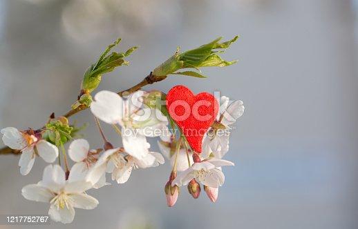 Baumblüte mit rotem Herz