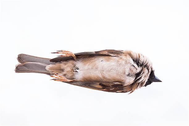 Tod Körper sparrow – Foto