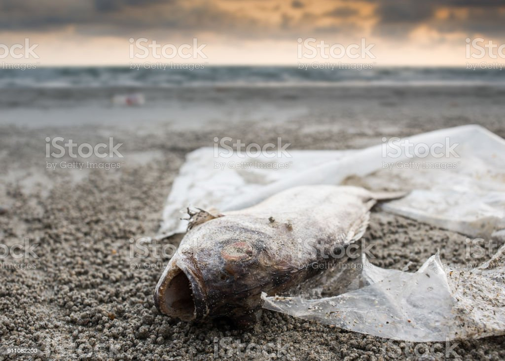 Death fish on the beach with plastic garbage stock photo