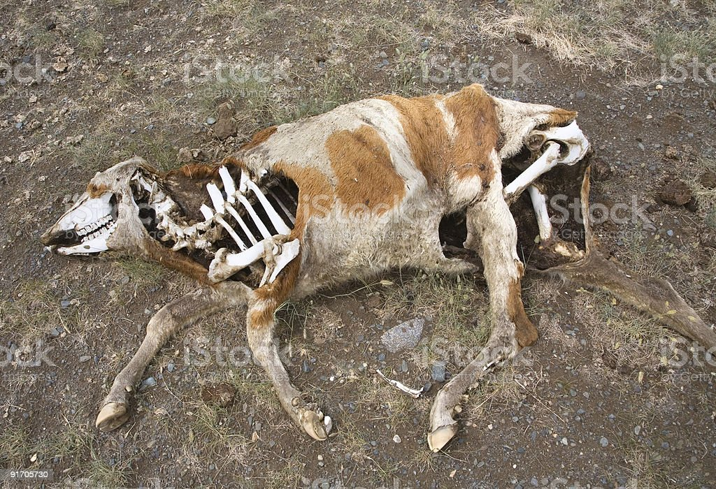 Death In The Desert stock photo
