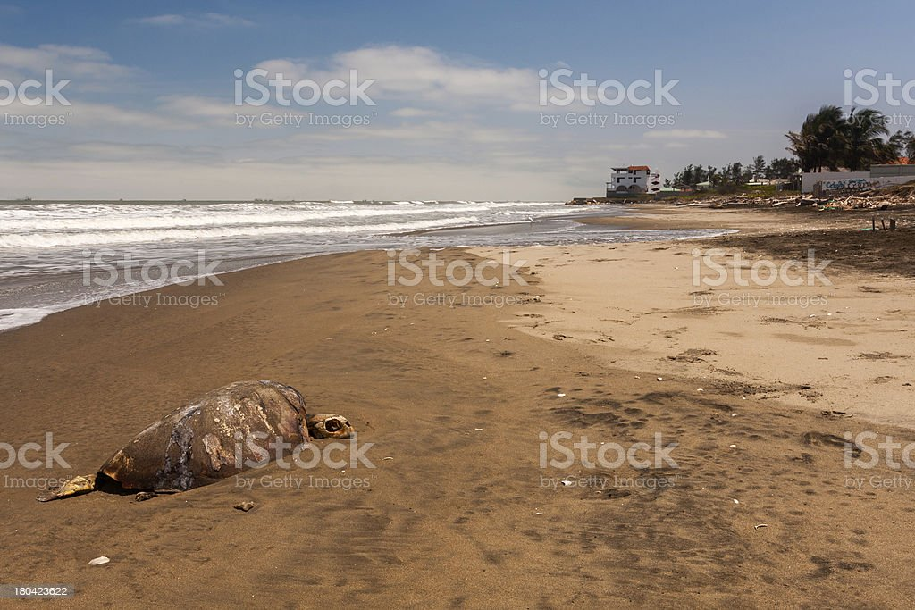 Death on the Beach royalty-free stock photo