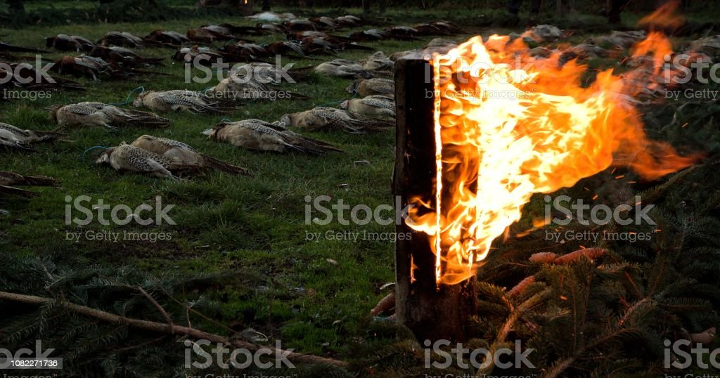 Death pheasants with burning wood stock photo