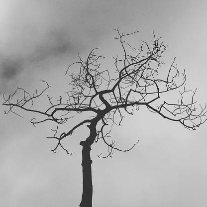 Death Stockfoto und mehr Bilder von Abgestorbene Pflanze