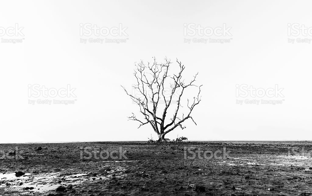 Death tree stock photo