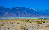 Death Valley during a rare flood in a dry lake bed near the Panamint Mountains, Death Valley national park