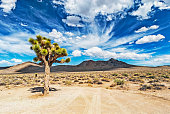 This dramatic view of the Joshua Tree in Death Valley National Park is very common in the desert lands in this vicinity.