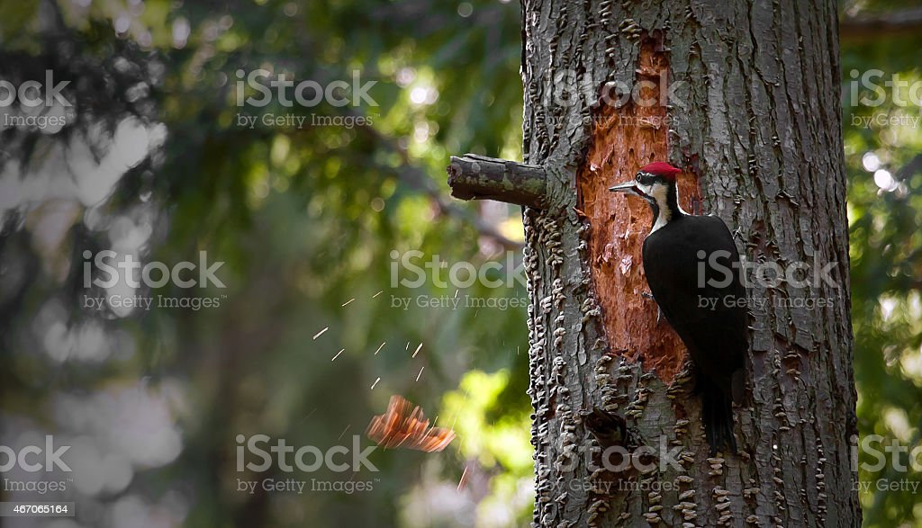 Debarking stock photo
