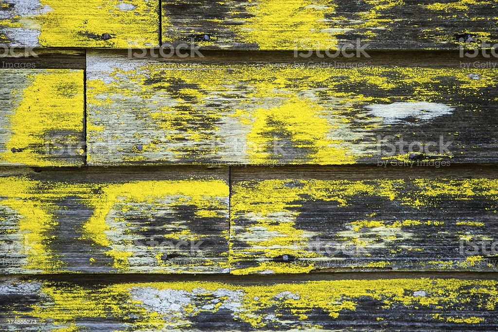 Decay and fungus on wooden siding royalty-free stock photo