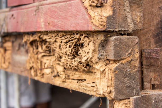 decay Rotten wood termite stock pictures, royalty-free photos & images