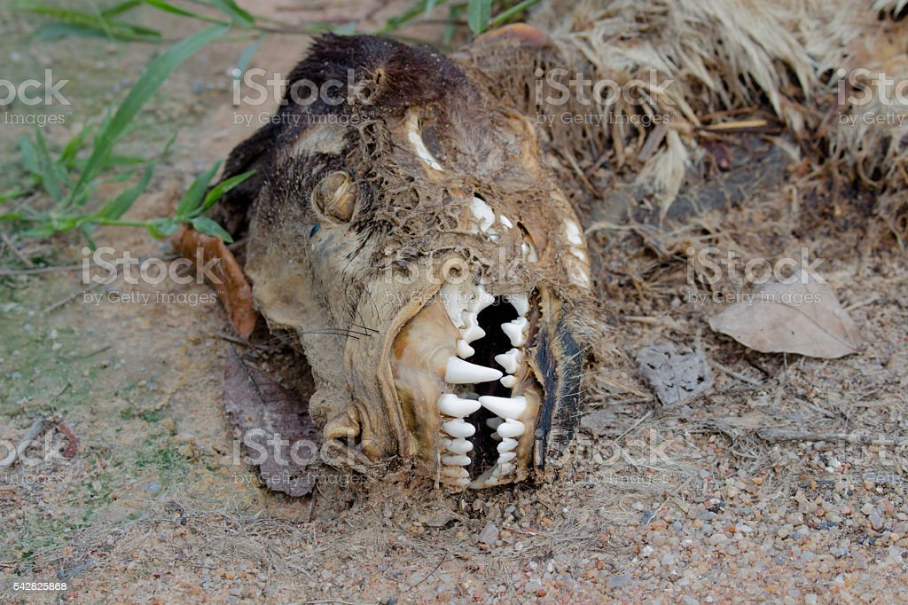 Decaying dog in the desert stock photo