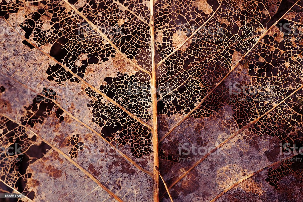 Decaying leaf stock photo