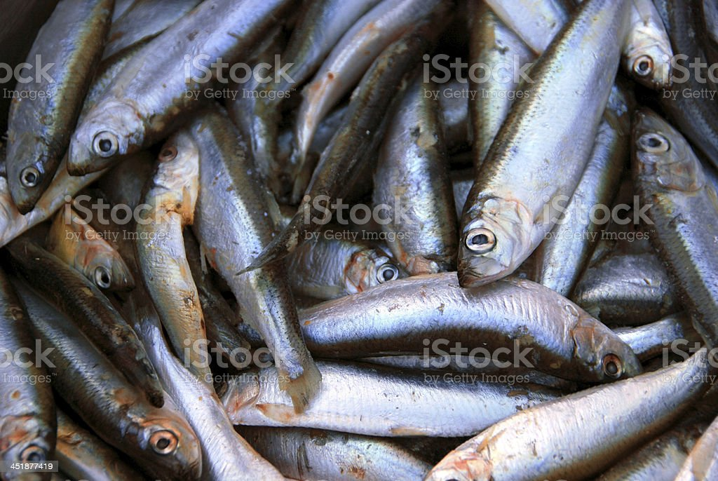 Deceased Spratt fish in a bowl stock photo