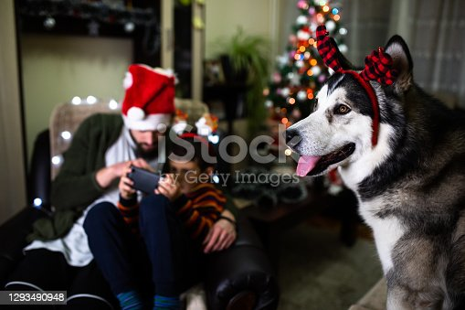 A family is enjoying Christmas Eve at home with their dog